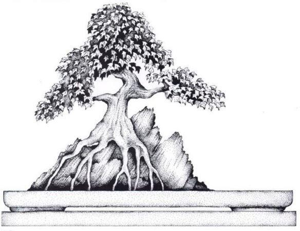 فرم بونسای ریشه روی سنگ