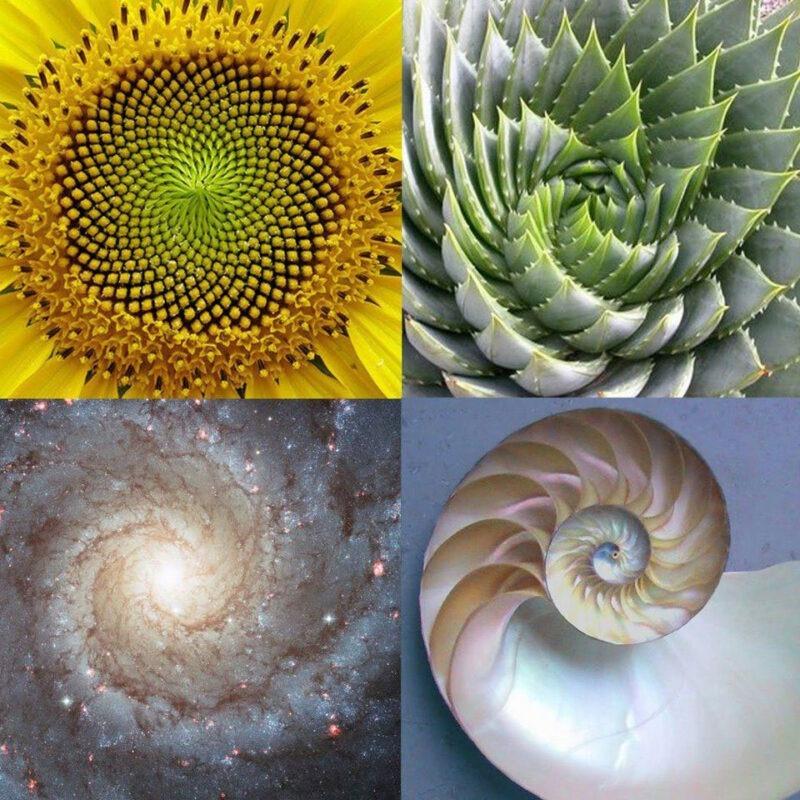 نسبتهای طلایی در طبیعت