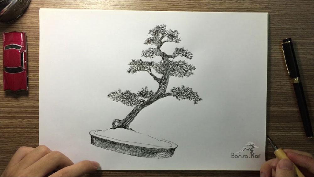 آموزش ساخت بونسای